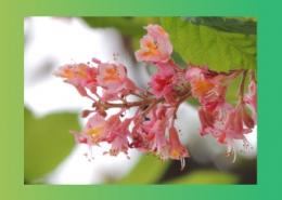 برای رفع التهاب و یبوست از چه گیاهانی میتوان کمک گرفت؟ پارس ایمن دارو
