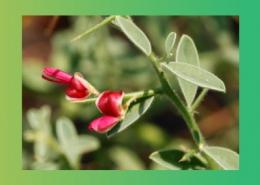 گیاهان دارویی ملین پارس ایمن دارو