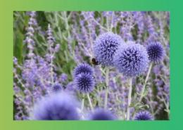 درمان بیماری های کبد به کمک گیاهان دارویی پارس ایمن دارو
