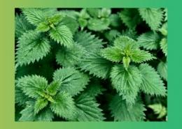گیاهان دارویی مفید برای بدن پارس ایمن دارو