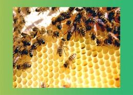 زنبور عسل کارگر شاهکار دارو و درمان